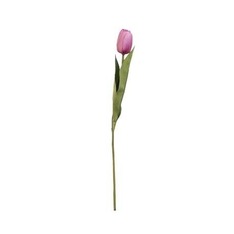 Tulipano fucsia